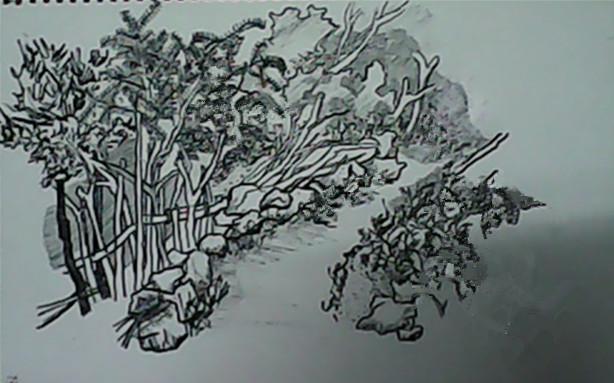 速写作品-山中路