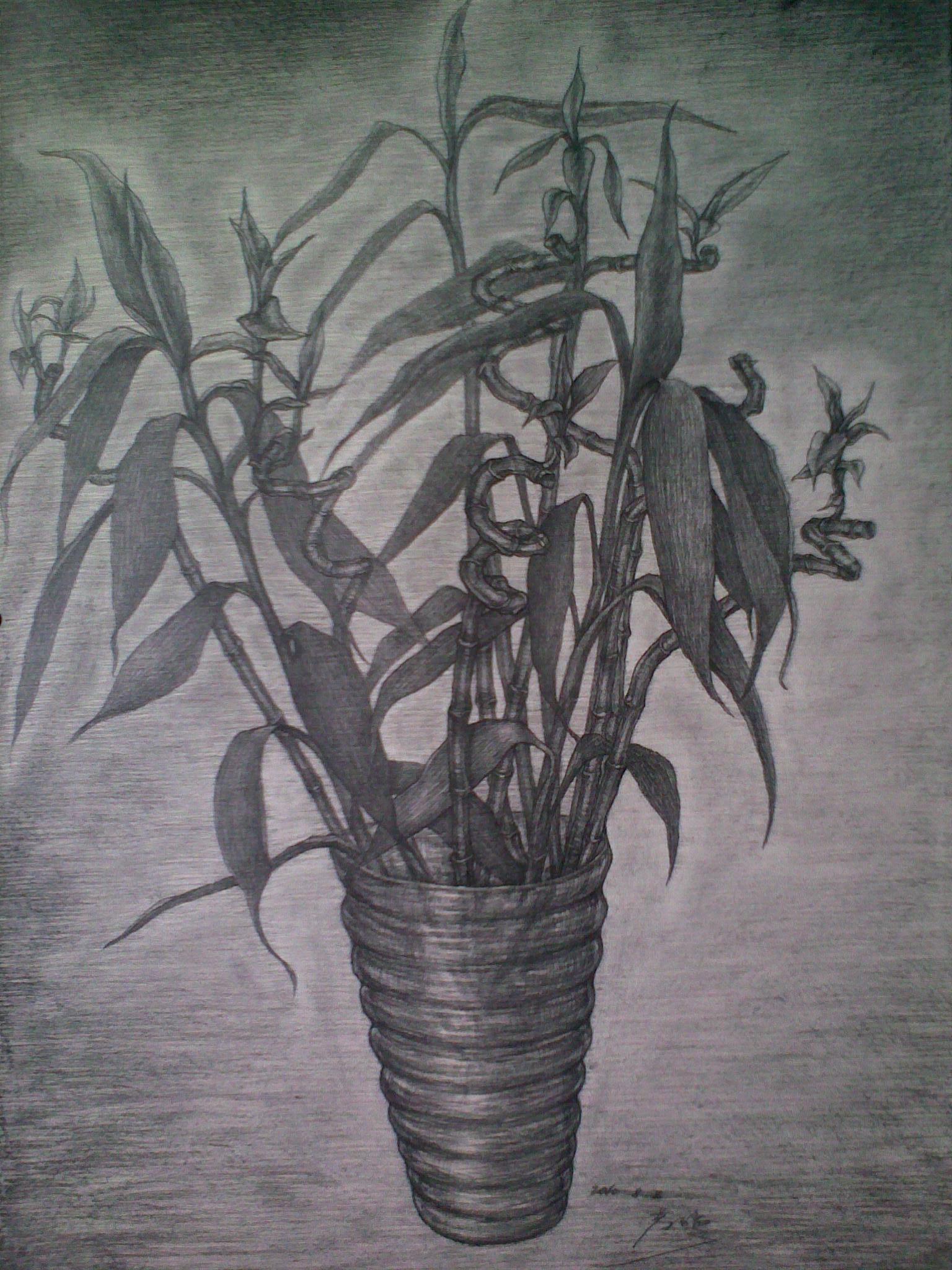 素描静物写生-花卉