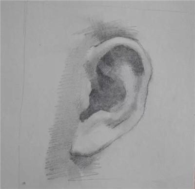素描头像之耳朵的基础知识!