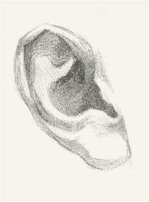 【耳部】素描头像五官及细节训练之耳朵