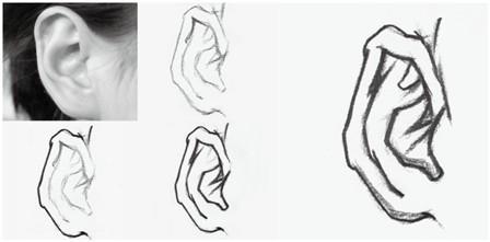 人物速写中耳朵的表现方法