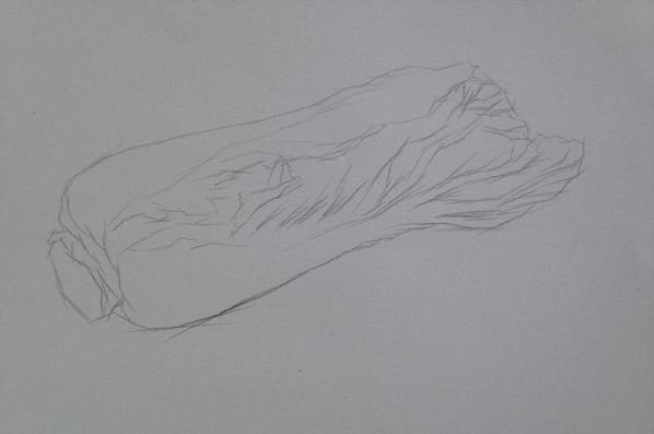 单个物体白菜的素描绘画步骤