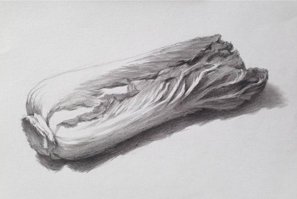 单个物体白菜的素描绘画步骤图片