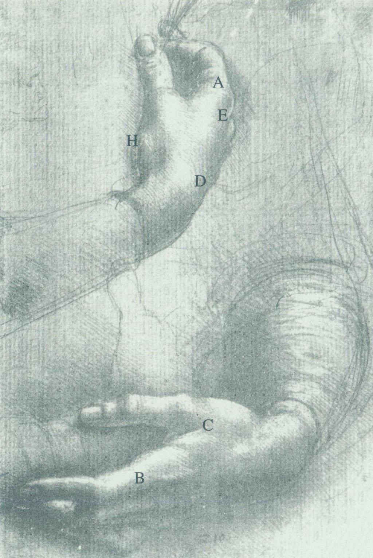 达芬奇素描《手习作》结构示意图