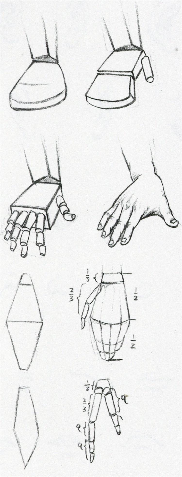(1)手的结构复杂,动作灵活,形态多变,可将手部分为腕、掌、指三部分来理解。腕骨的背面凸起,掌面凹陷。由于腕骨和掌骨连成一体,腕的体积不太明显,但在手的造型中容易忽视腕的结构特征,必须注意腕部和手、臂的连接,否则手的造型则生硬、呆板。手的动作首先体现在腕部,然后才是掌骨和指骨。   (2)手部的骨骼决定着手部的基本形体。指骨外皮下的肌肉脂肪很少,因此手指骨的基本形几乎等同于手指的外形。因此,如何理解指骨以及表现指骨是刻画手部的重点。   (3)整个手部自腕部至指尖呈阶梯状,腕、掌、指逐级下降,在对手的