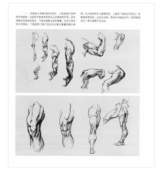 速写人物结构