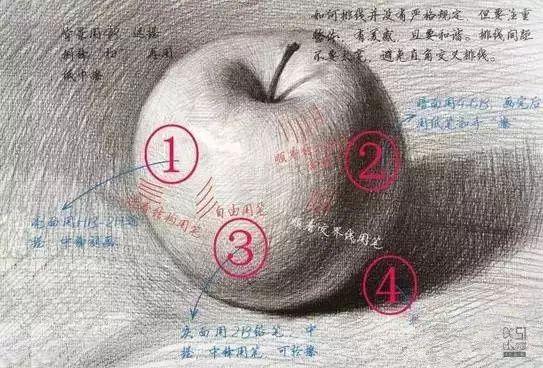 【素描】画好苹果不同品种,摆放,背景,视角等技巧这篇
