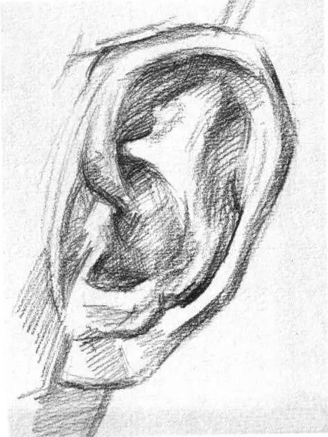 素描头像被扣分最多的'耳朵',你画的耳朵还好吗 - 51美术高考网