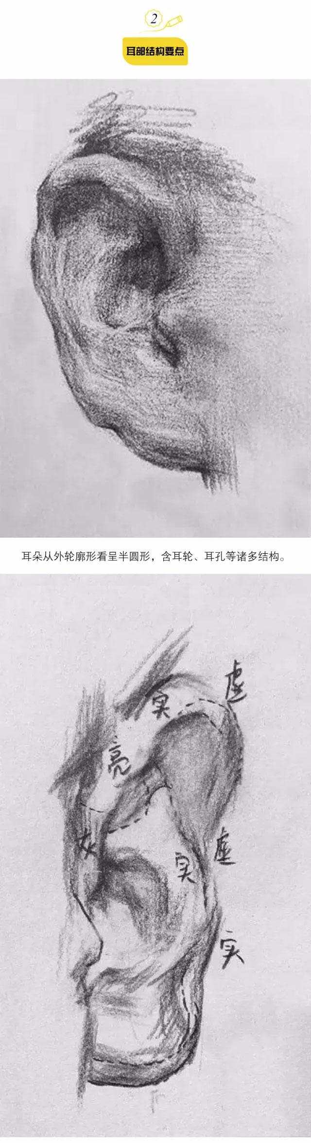 素描头像之五官的结构画法 - 51美术高考网
