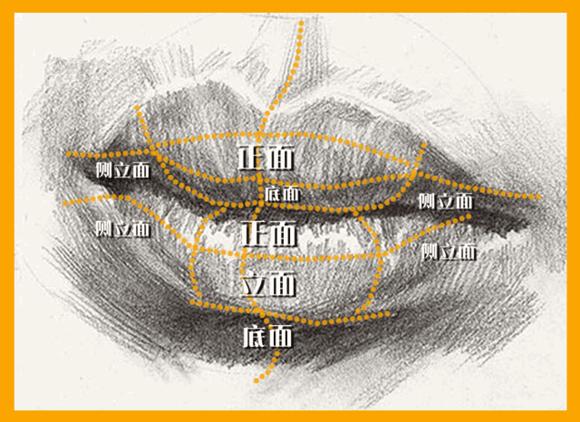 嘴唇的细节应该如何表现?   口线又称口裂,它的起伏、深浅以及方圆的变化都需要细细观察表现到位的,它不是一条简单的弧线,而是一条表达感情的多变的生命线。唇结节隆起的形体不仅影响上唇的明暗交界线,对口线的起伏也有很大影响。同时要注意唇结节叠压远处的上唇。下唇的中段与颏唇沟的关系要遵循重掐下唇边缘,轻掐颏唇沟的原则,它们之间的暗部空间则揉成透明的小暗面,避免死黑一片。